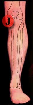 Left Knee Pain Front Inside